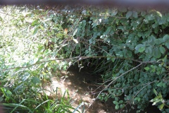 15.-Millbrook-Gardens-Bridge-Looking-Downstream