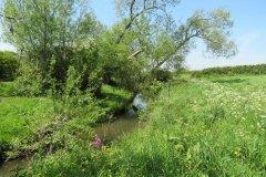11.-Upstream-from-Dunpole-Farm-Approach-Bridge