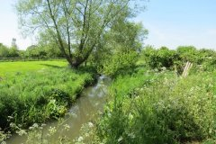 13.-Upstream-from-Dunpole-Farm-Approach-Bridge