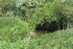22.-Downstream-from-Dunpole-Farm-Approach-Bridge