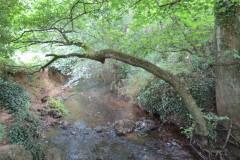 15.-Downstream-from-Haselbury-Old-Bridge-1