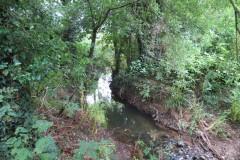 22.-Upstream-from-Haselbury-Old-Bridge-1