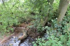 22.-Upstream-from-Haselbury-Old-Bridge-2