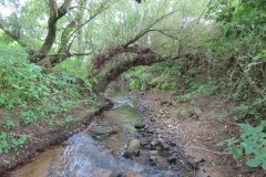 8.-Downstreaqm-from-Haselbury-Mill-3