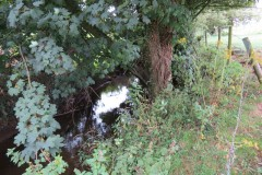 Upstream-from-ROW-Bridge-466-6