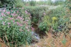 Upstream-from-ROW-Bridge-466-9
