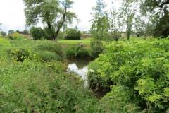 10.-Upstream-from-Bow-Bridge-3