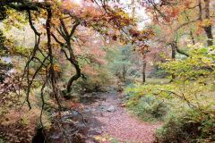 Autumn Colours - Horner Woods
