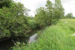 River-Parrett-flowing-between-Creedy-Bridge-and-Petherton-Bridge-10