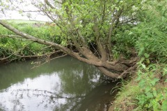 River-Parrett-flowing-between-Creedy-Bridge-and-Petherton-Bridge-11