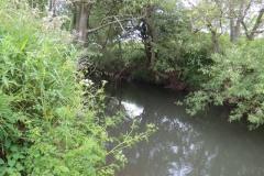 River-Parrett-flowing-between-Creedy-Bridge-and-Petherton-Bridge-12