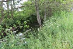 River-Parrett-flowing-between-Creedy-Bridge-and-Petherton-Bridge-14