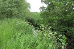 River-Parrett-flowing-between-Creedy-Bridge-and-Petherton-Bridge-15