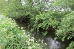 River-Parrett-flowing-between-Creedy-Bridge-and-Petherton-Bridge-16
