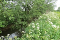 River-Parrett-flowing-between-Creedy-Bridge-and-Petherton-Bridge-17