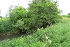River-Parrett-flowing-between-Creedy-Bridge-and-Petherton-Bridge-19