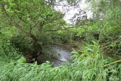River-Parrett-flowing-between-Creedy-Bridge-and-Petherton-Bridge-20