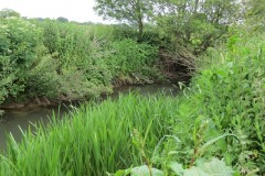 River-Parrett-flowing-between-Creedy-Bridge-and-Petherton-Bridge-21