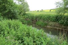 River-Parrett-flowing-between-Creedy-Bridge-and-Petherton-Bridge-23