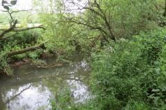 River-Parrett-flowing-between-Creedy-Bridge-and-Petherton-Bridge-24