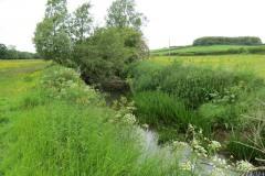 River-Parrett-flowing-between-Creedy-Bridge-and-Petherton-Bridge-7