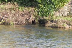 40.-Rejoins-River-Barle_640x480