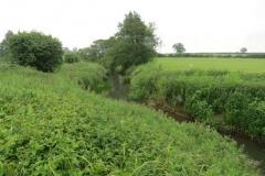 5.-Looking-upstream-from-pipe-bridge-downstream-from-Petherton-Bridge