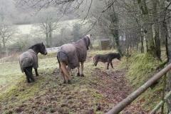 1. Ponies above East Lyn river