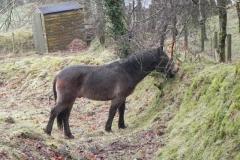 2. Ponies above East Lyn river