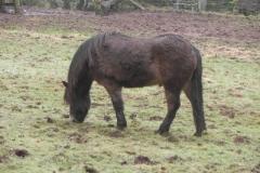 4. Ponies above East Lyn river