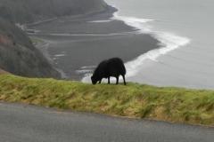 7. Black sheep Lynmouth