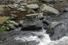 9. Dipper East lyn river