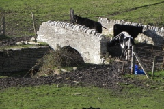 46.-Cooks-Cary-Farm-Bridge-Upstream-Arch