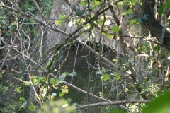 51.-Cary-Bridge-Downstream-Arch
