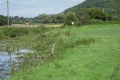 20.-Downstream-from-Somerton-Fishponds-Footbridge-4