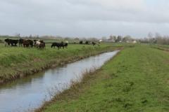 10.-Upstream-from-Midelney-Pumping-Station-1