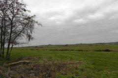 King's Sedgemoor Drain Nature