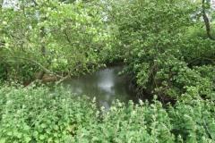 River Parrett Tributaries