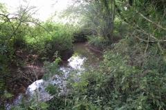 10. Flowing through Muddymoor Copse