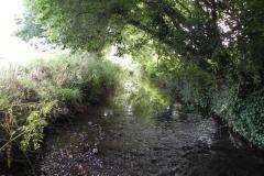 38. Flowing through Home Farm