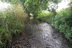 41. Flowing through Home Farm