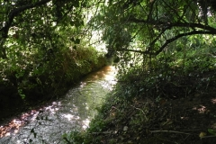 5. Flowing through Muddymoor Copse