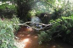 6. Flowing through Muddymoor Copse