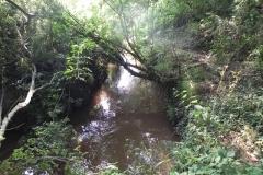 7. Flowing through Muddymoor Copse