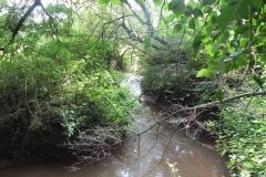 8. Flowing through Muddymoor Copse