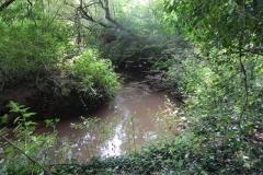 9. Flowing through Muddymoor Copse