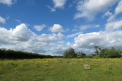 Buttercup-fields-by-River-Parrett-below-Creedy-Bridge-3