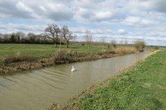 Westport Canal Nature