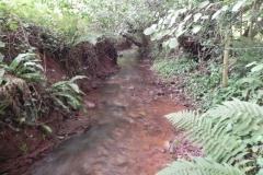 17. Upstream from Bilbrook
