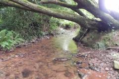 23. Upstream from Bilbrook